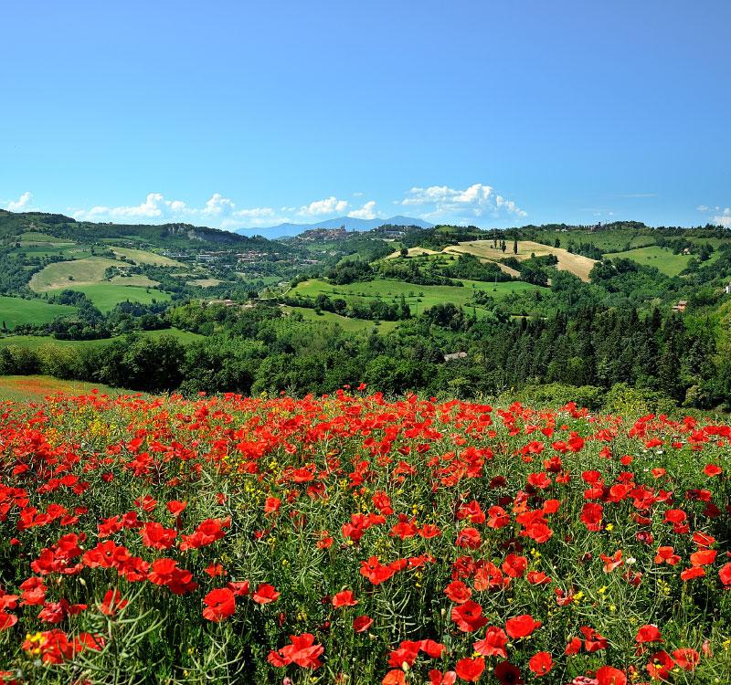Natura Pesaro